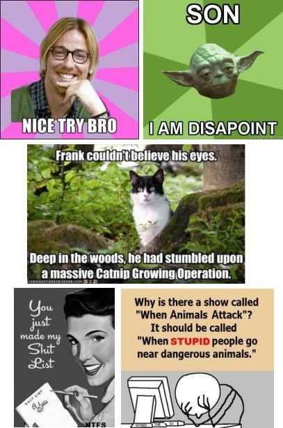 meme examples